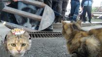 Talihsiz yavru kedi sırra kadem bastı
